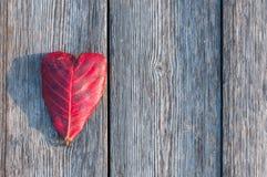 Feuille de forme de coeur sur le fond en bois Photographie stock