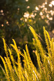 Feuille de fougère au coucher du soleil Images stock