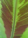Feuille de fougère de spore Photographie stock