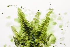 Feuille de fougère en peinture verte images libres de droits
