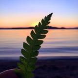 Feuille de fougère supportée dans le coucher du soleil avec le lac et les montagnes calmes Image libre de droits