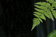 Feuille de fougère sur le fond foncé dans le jardin japonais sur Vancouve photos libres de droits