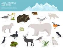Feuille de glace et biome polaire de désert Carte terrestre du monde d'écosystème Conception infographic arctique d'animaux, d'oi illustration libre de droits