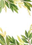 Feuille de laurier d'aquarelle d'isolement sur le fond blanc illustration de vecteur