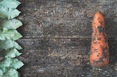 Feuille de laurier et carotte sale Photos libres de droits