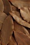 Feuille de laurier, herbe sèche Images stock