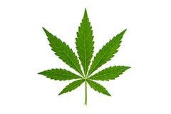 feuille de marijuana sur le fond blanc image libre de droits