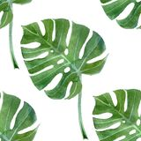 Feuille de monstera d'aquarelle sans couture illustration libre de droits