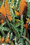 Feuille de nature de deux couleurs Image libre de droits