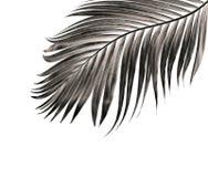 Feuille de palmier d'isolement sur le fond blanc Photographie stock libre de droits