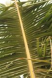 Feuille de palmier sur un fond de ciel Images stock