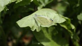 Feuille de papillon images stock