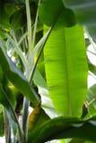 Feuille de paume décorative Photo stock
