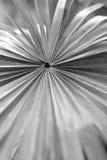 Feuille de paume décorative Image stock