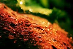 Feuille de raisin rouge avec des gouttes de pluie images libres de droits