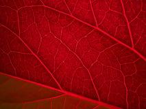 Feuille de retour allumée de rouge Image libre de droits