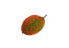 Feuille de rougissement et de jaunissement d'automne illustration de vecteur