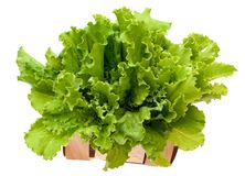 Feuille de salade Laitue d'isolement sur le fond blanc photo stock