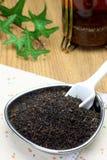 Feuille de thé Photos libres de droits