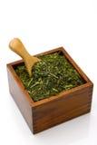 Feuille de thé verte japonaise Images libres de droits