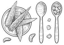Feuille de Vera d'aloès, illustration de gel, dessin, gravure, encre, schéma, vecteur illustration de vecteur