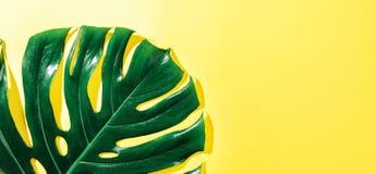 Feuille de vert de Monstera sur le jaune photo stock