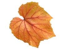 Feuille de vigne en automne Images stock