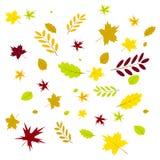 Feuille des feuilles d'automne photos stock