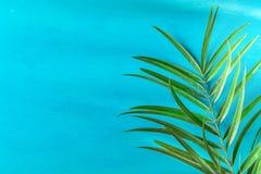 Feuille en épi de palmier sur le fond bleu-clair peint de mur Fuites lumineuses de lumière du soleil de matin Couleurs en pastel  Photos stock