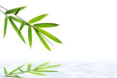 Feuille en bambou et réflexions sur l'eau Photo libre de droits