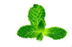 Feuille en bon état de cuisine d'isolement sur le fond blanc Source naturelle de menthe poivrée verte d'huile de menthol L'herbe  images libres de droits
