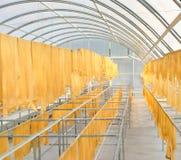 Feuille en caoutchouc dans la chambre de séchage solaire Photos libres de droits