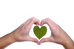 Feuille en forme de coeur décrite par des mains de filles Images libres de droits