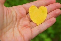 Feuille en forme de coeur d'automne à disposition Photos stock