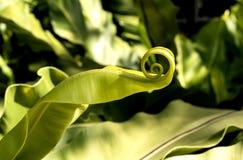 Feuille en spirale dans la forêt Photos stock