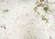 Feuille et branches vertes Photographie stock