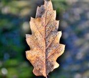 Feuille et givre d'automne Photographie stock libre de droits