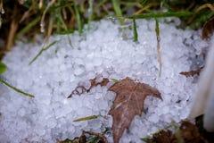 Feuille et herbe émergeant hors des granules de glace congelés Images libres de droits