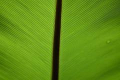 Feuille et lumière vertes d'ombres Photos stock
