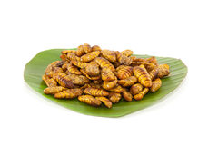 Feuille et ver à soie de banane Images libres de droits