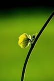 Feuille et vigne vertes fraîches sur le fond de tache floue photos stock