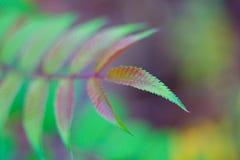 Feuille fraîche colorée Images stock
