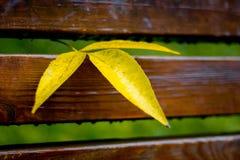 Feuille humide jaune sur un banc en parc de ville Temps pluvieux dans photos stock