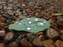 Feuille humide sur des roches image libre de droits