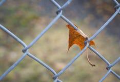 Feuille isolée d'automne sur la barrière en octobre Photo libre de droits