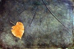 Feuille isolée d'automne sur le fond en bois Image stock