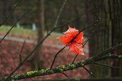 Feuille isolée sur un arbre photos stock