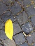 Feuille jaune Photographie stock libre de droits