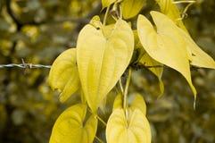 Feuille jaune photos stock
