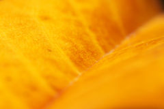 Feuille jaune Photos libres de droits
